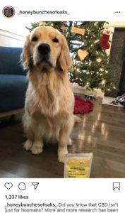 gus and boogie cbd dog treats